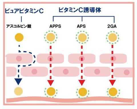 即効性ビタミンCと浸透性ビタミンC誘導体の2種類を配合